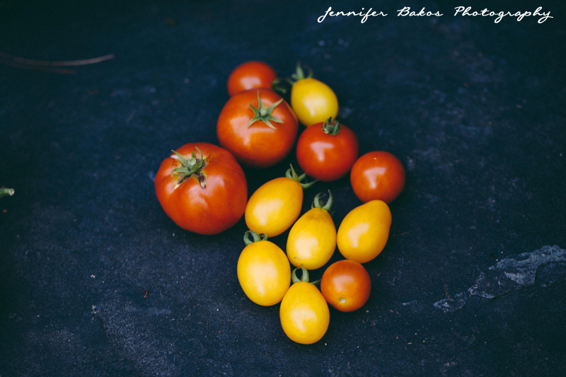 tomatoes, garden, cherry tomatoes, new england food photographer, new hampshire food photographer, lifestyle photographer, new england summer